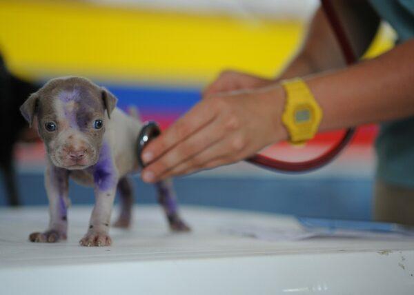 Suggerimenti per la cura del tuo Beagle