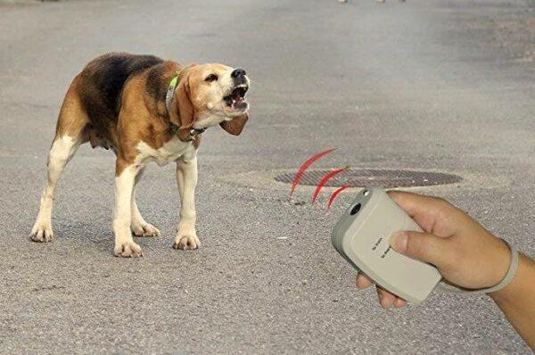 Come allontanare i randagi che infastidiscono il nostro Beagle