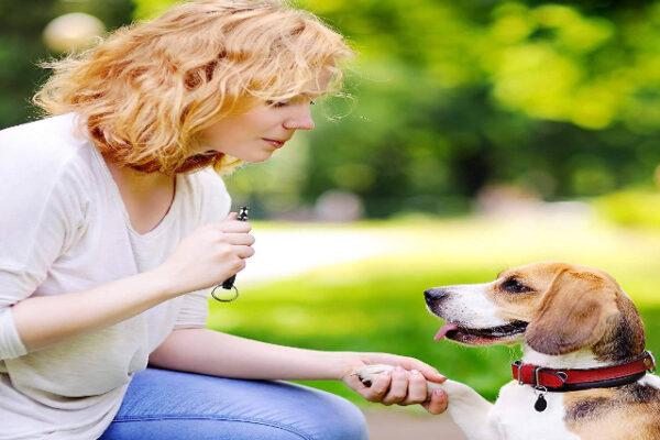 Fischietto ad ultrasuoni per educare i Cani